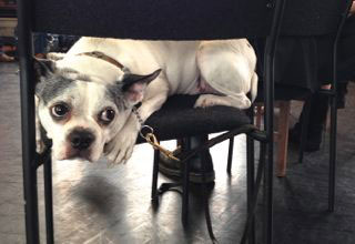 Theatre Pets: Barking with Gloucester Mitchell-Reighley