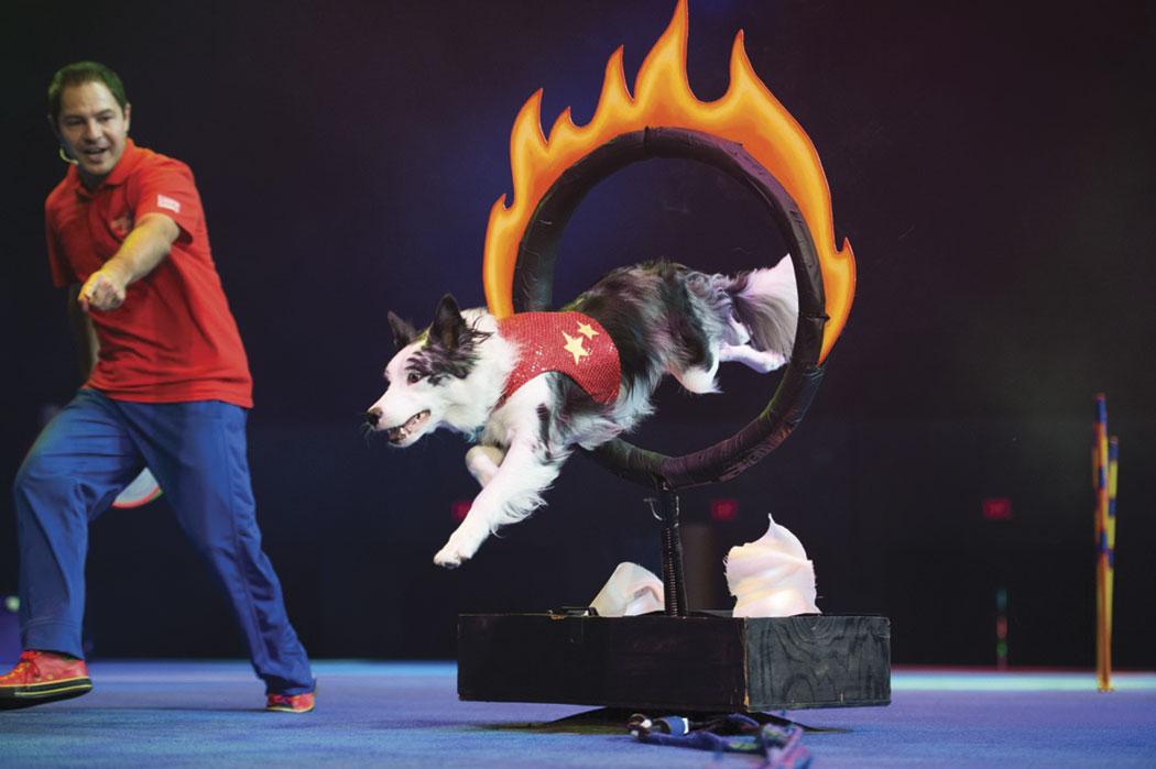 BCPA15 Chris Perondi Stunt Dogs event 2015